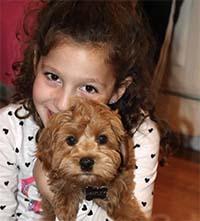Cuddly Labradoodle Puppy