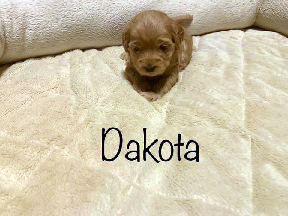 dakota 3 weeks