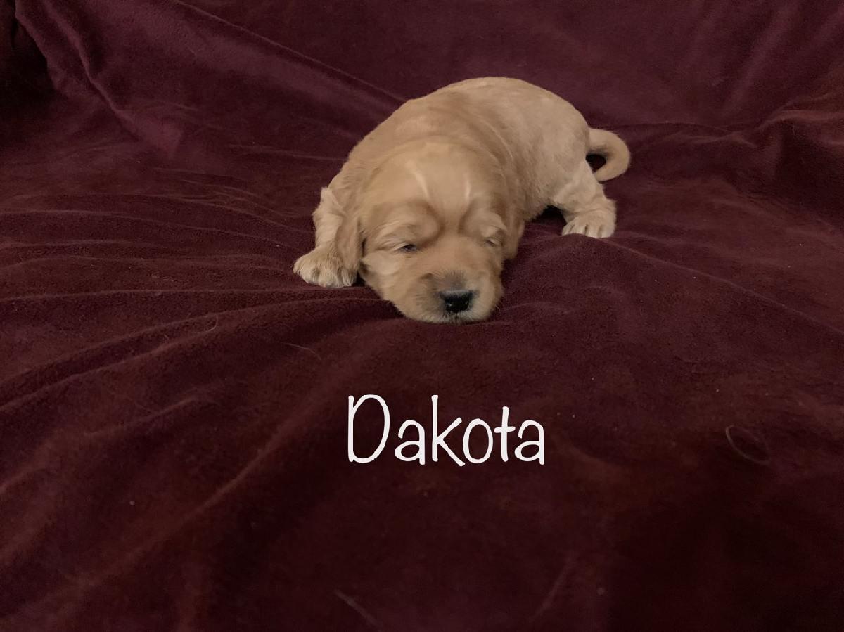 dakota-2 weeks