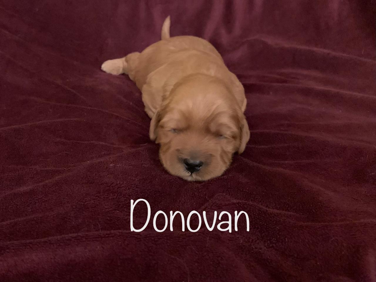 donovan-2 weeks