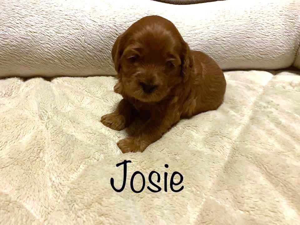 josie 3 weeks