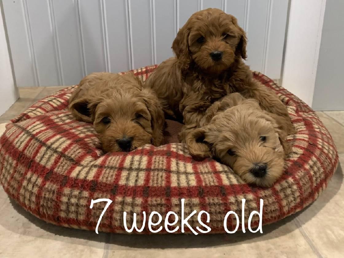 siblings 7 weeks