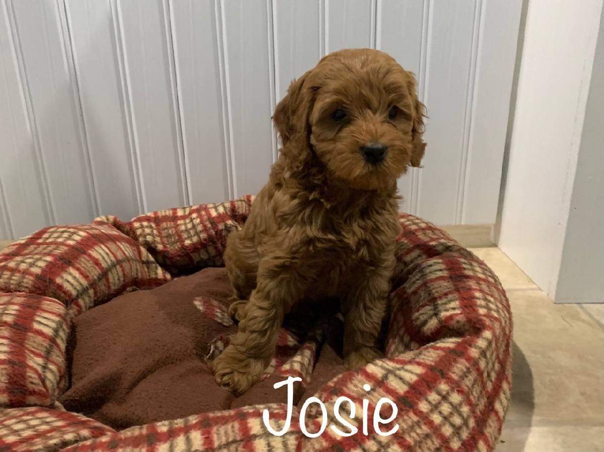 josie 7 weeks