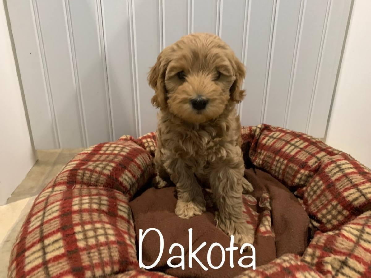 dakota 7 weeks