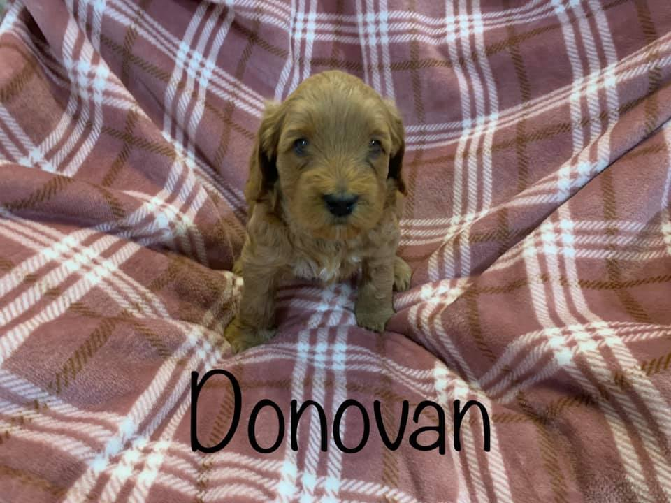 donovan 5 weeks