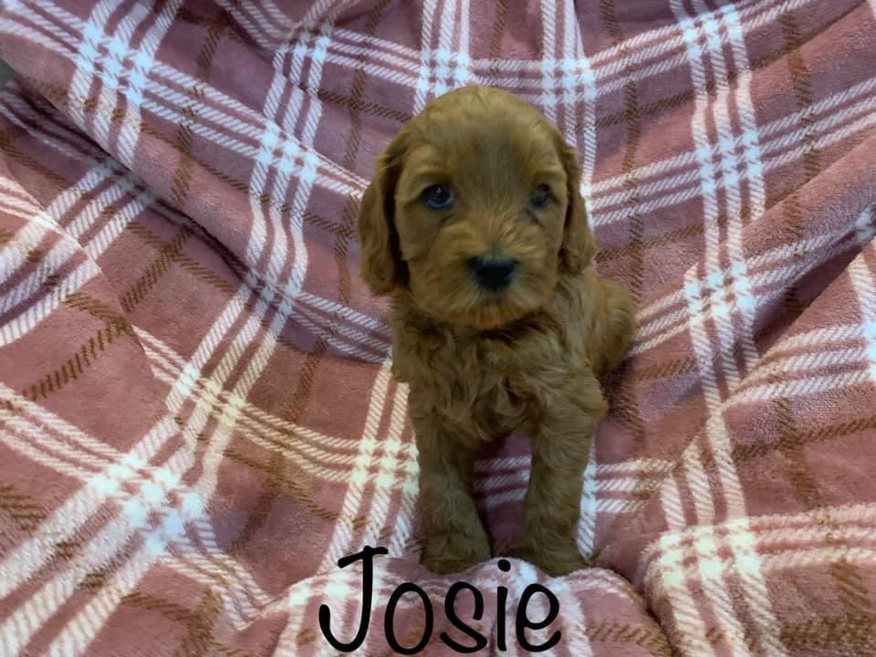 josie 5 weeks