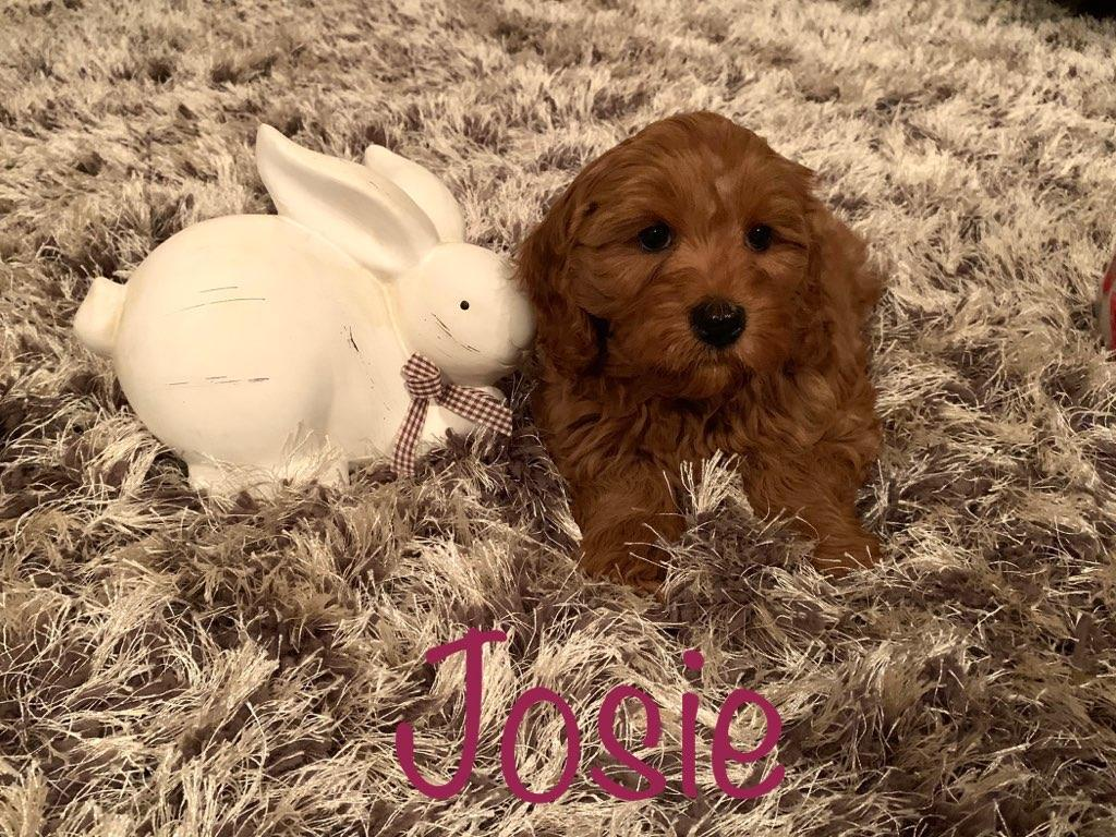 josie 8 weeks