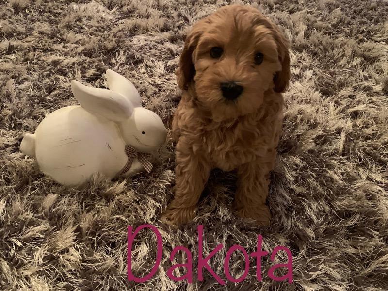 dakota 8 weeks
